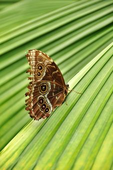 Free Butterfly On Striped Plant Royalty Free Stock Photos - 9036538