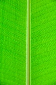Free Tropical Leaf Stock Photography - 9036782