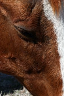 Free Sorrel Horse Eye Stock Photography - 9037082