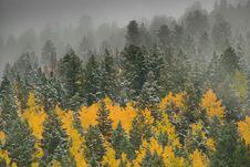 Free Aspens In The Snow Stock Photos - 9038243