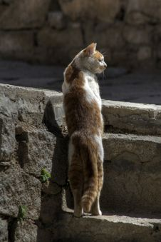 Free Staring Cat Royalty Free Stock Image - 9038886