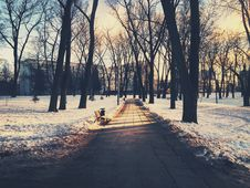 Free Path Through City Park In Winter Royalty Free Stock Photo - 90358715