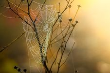 Free Spider Web, Arachnid, Spider, Invertebrate Stock Photo - 90359700