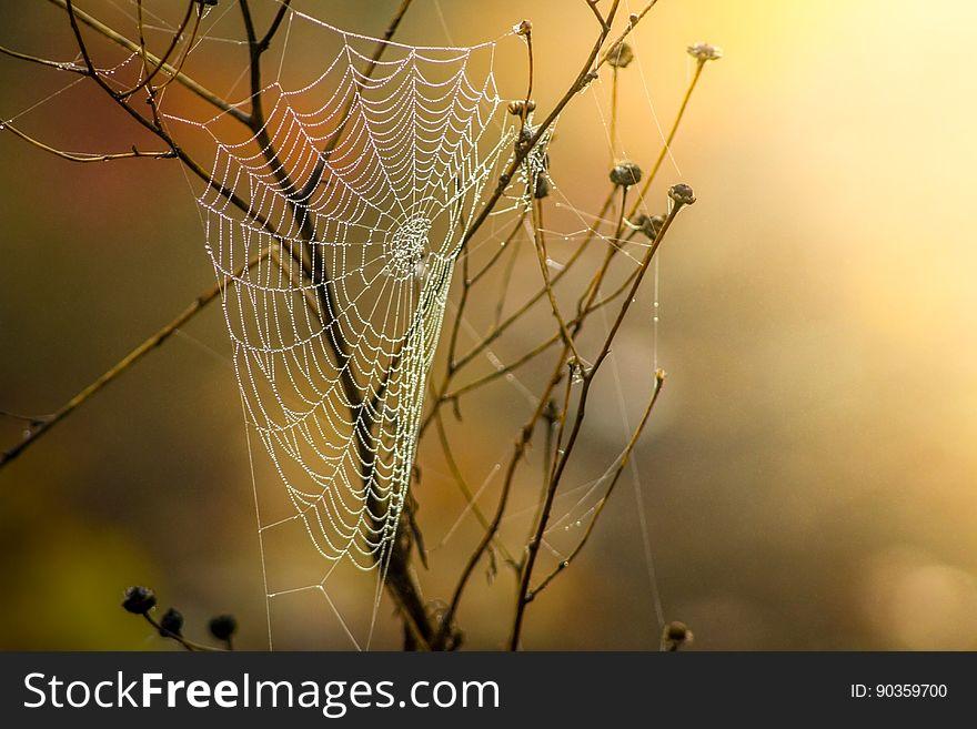 Spider Web, Arachnid, Spider, Invertebrate