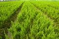 Free Plants Stock Photo - 9043940