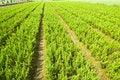 Free Plants Stock Image - 9044021