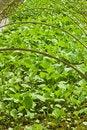 Free Garden Royalty Free Stock Image - 9044966