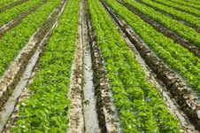 Free Seedlings Royalty Free Stock Image - 9043686