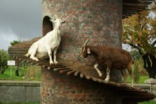 Free Goat Tower Stock Photography - 9044152