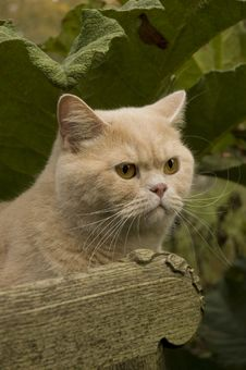 Free Cat In The Garden Stock Images - 9044924