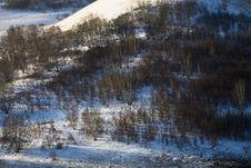 Free Snow Meadow Royalty Free Stock Photo - 9045145
