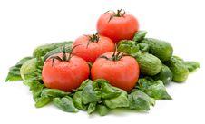 Free Vivid Wet Ripe Tomatoes Royalty Free Stock Photo - 9047065