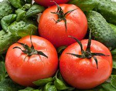 Free Vivid Wet Ripe Tomatoes Stock Photo - 9047140