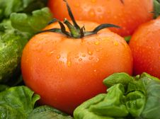 Free Vivid Wet Ripe Tomatoes Royalty Free Stock Photography - 9047147