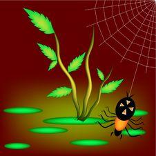 Free Marsh Spider Royalty Free Stock Photo - 9049645