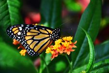Free Profile Of Butterfly On Flower Royalty Free Stock Image - 90429636
