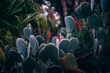 Free Cactus Plants Royalty Free Stock Images - 90429889