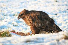 Free Close-up Of Eagle Stock Photo - 90490500