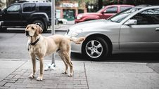 Free Brown Short Coated Large Dog Near Grey Car Royalty Free Stock Images - 90492049