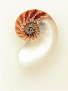Free Nautilida, Invertebrate, Product Design Stock Photo - 90492200