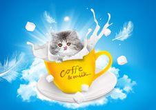 Free Cat, Small To Medium Sized Cats, Kitten, Cat Like Mammal Stock Photography - 90492252