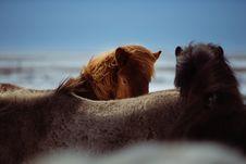 Free Mane, Horse Like Mammal, Horse, Sky Royalty Free Stock Image - 90492306