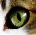 Free Cat Eye Royalty Free Stock Photo - 9051025