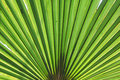 Free Palm Tree Frond Royalty Free Stock Photography - 9058157