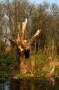Free Dead-wood Stock Image - 9059511