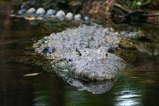 Free Croc Stock Photo - 9050180