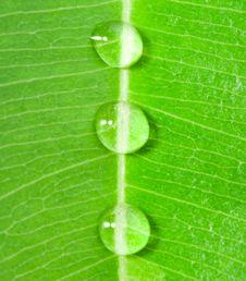 Three Water Drops Stock Image