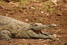 Free Croc Stock Photos - 9050323