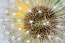 Dandelion Closeup Royalty Free Stock Photography