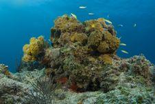 Free Yellow Bahama Coralhead Royalty Free Stock Photos - 9051728