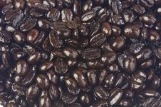 Free Coffee Beans Stock Image - 9052351