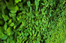 Free Leaf On Wall Royalty Free Stock Image - 9052626