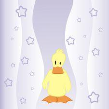Free Duck Stock Photos - 9053483