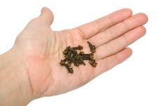 Free Seasoning Carnation In Hand Royalty Free Stock Image - 9053876