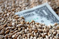 One Dollar Banknote Among Wheat Grains Royalty Free Stock Photography