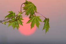 Free Foliage And  Sun Stock Image - 9056461