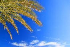 Free Palms Foliage Royalty Free Stock Photography - 9057877