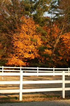 Free White Fence In Fall Colors Stock Photo - 9058000