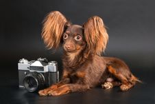 Pedigree Dog And Outbred Camera. Stock Photography