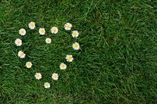 Daisy Heart In A Meadow Royalty Free Stock Photography
