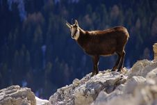 Free Mountain Goat Stock Photo - 90553550