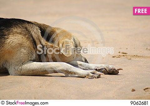 Free Lazy Dog On Beach Stock Image - 9062681