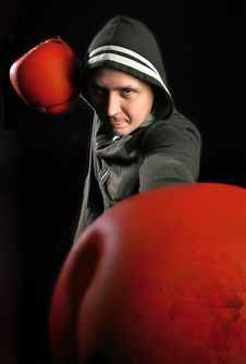 Free Boxer Stock Photography - 9060332