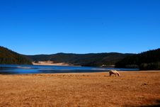 Horse By The Lake Royalty Free Stock Images