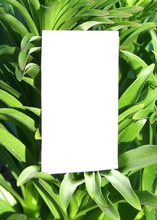 Free Card Blank Stock Photos - 9060853