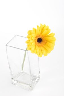 Free Yellow Gerbera In A Vase Stock Photography - 9061672